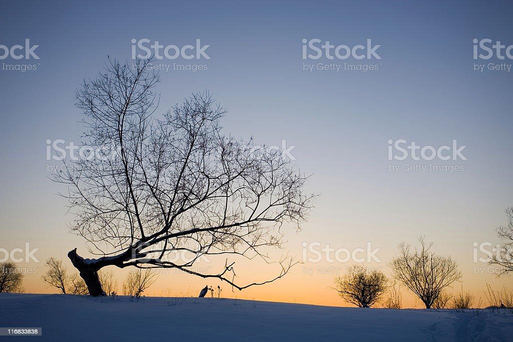 Winter sunset. Gloaming stock photo