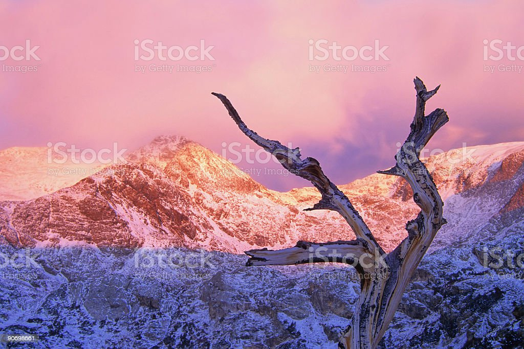 winter sunset snow covered mountains and tree stock photo