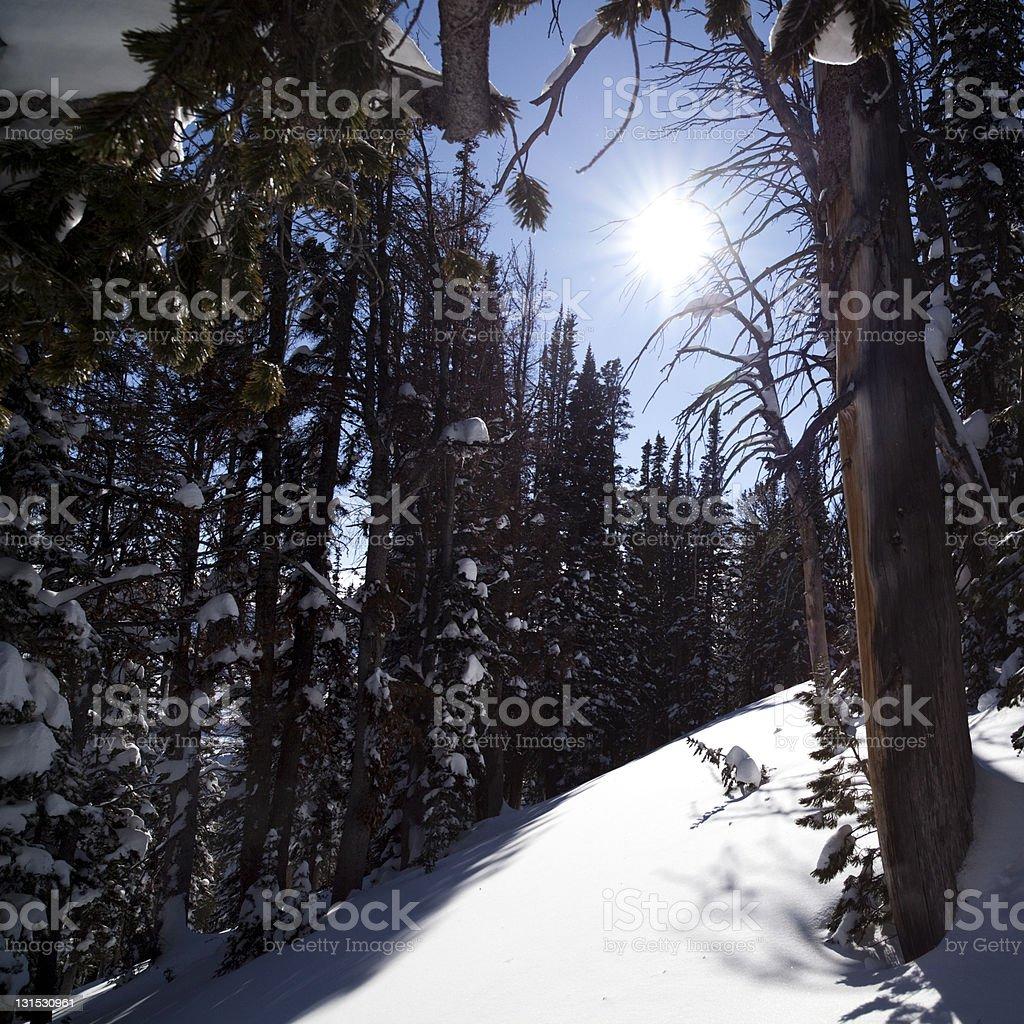 Winter sunshine royalty-free stock photo