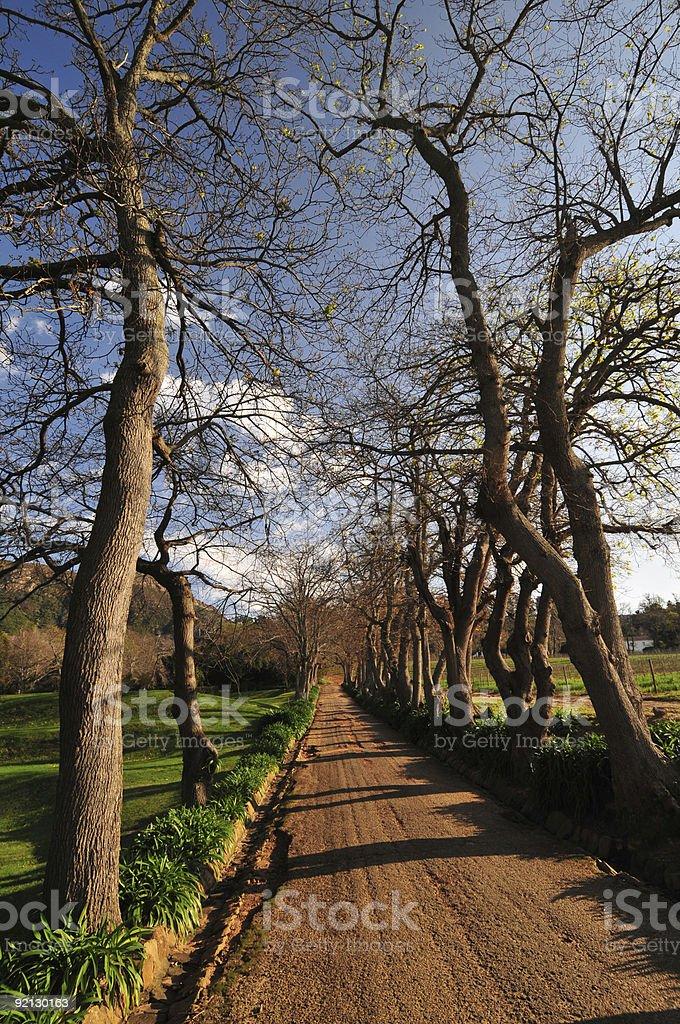 Winter Tall Trees stock photo