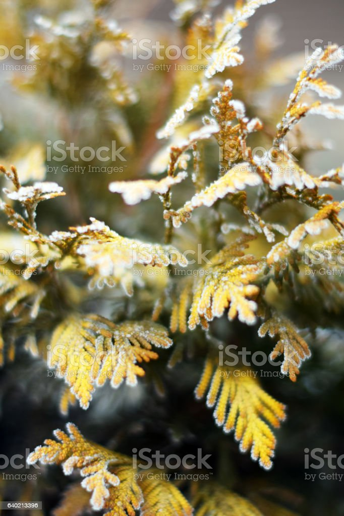 Winter time stock photo