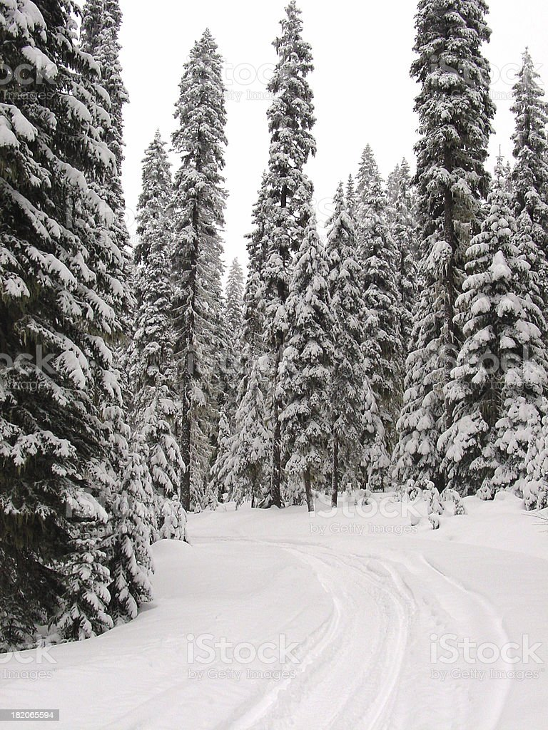 Winter Tracks stock photo
