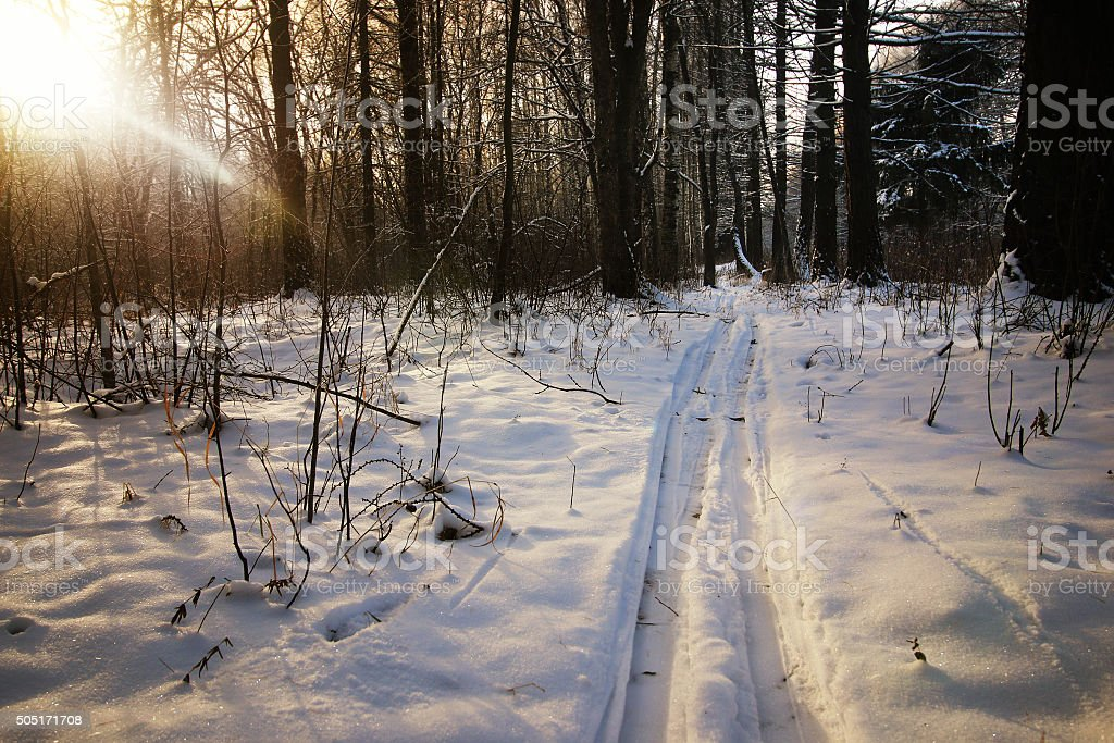 winter trails in the forest stock photo