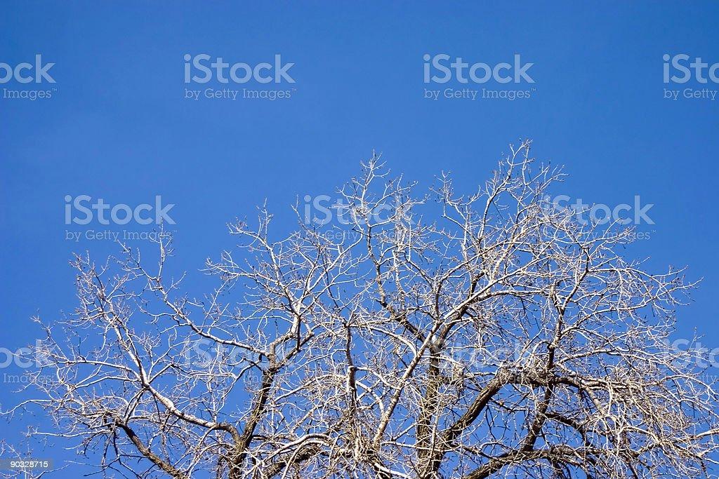 Winter Tree 2 royalty-free stock photo