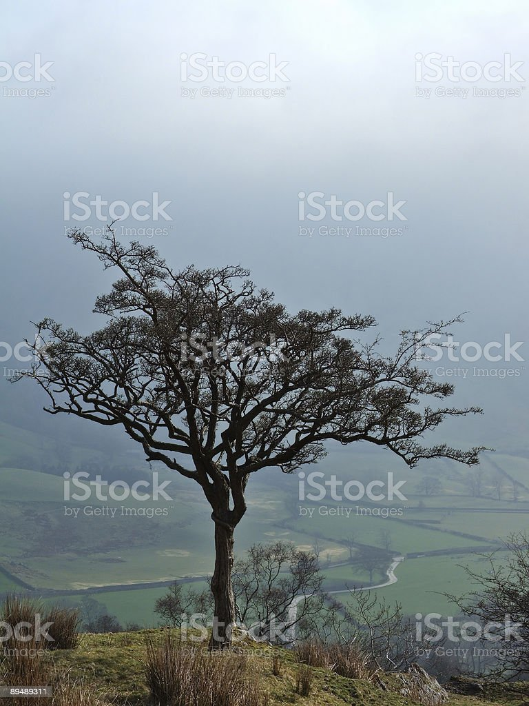 Winter tree above Longsleddale royalty-free stock photo