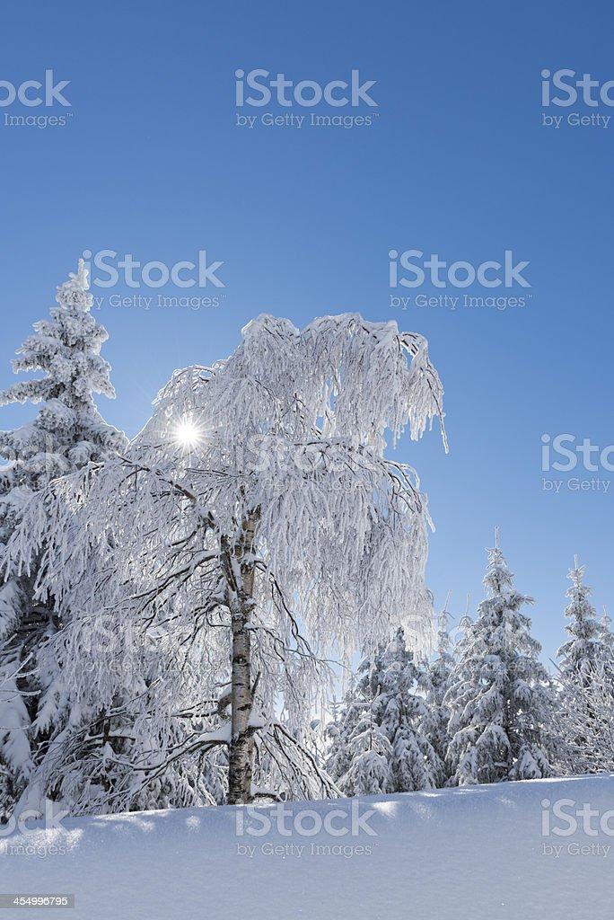 Winter , tree against the sun stock photo