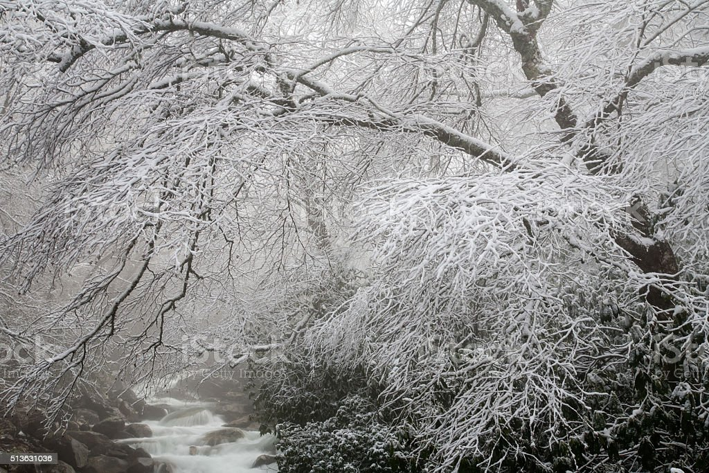 Winter Tree and Stream stock photo