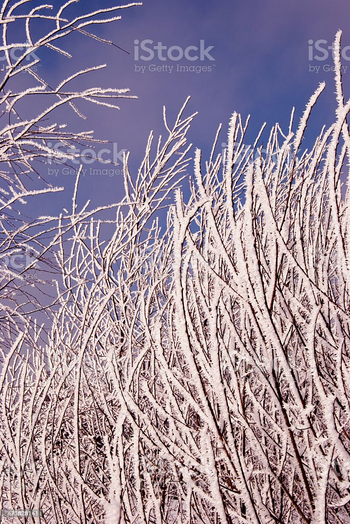 winter tree branches and hoar royalty-free stock photo