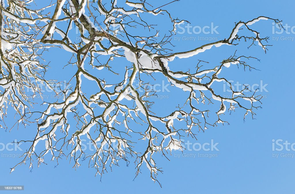 Winter Tree Branches royalty-free stock photo
