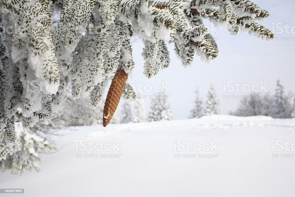 Winter Tree Covered With Snow royalty-free stock photo