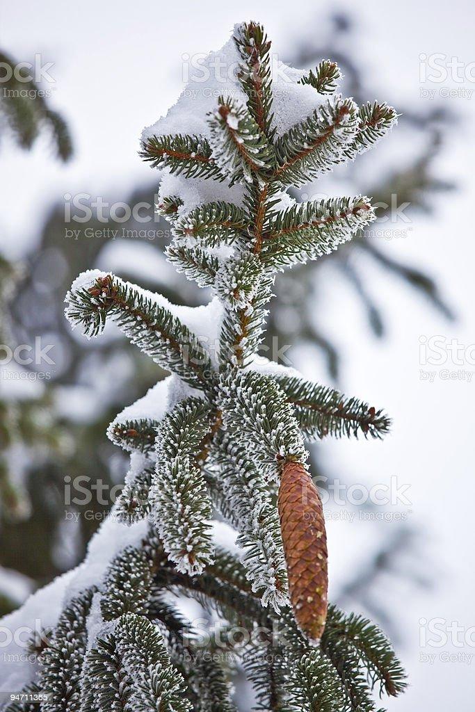 Winter tree detail stock photo