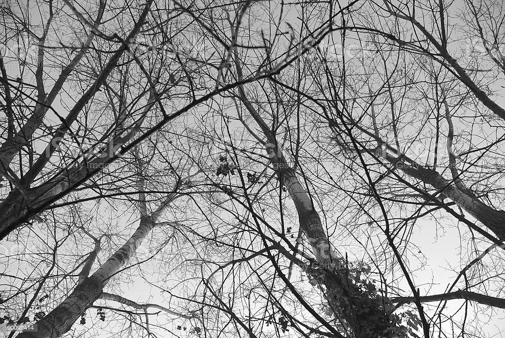 Winter tree from below royalty-free stock photo