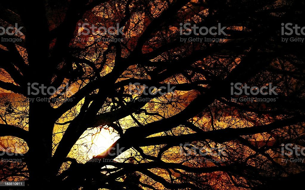 Winter tree in silhouette against sunset royalty-free stock photo