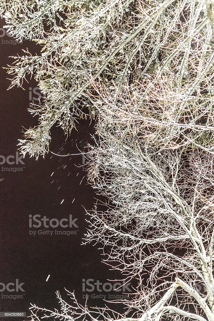 Winter Tree in Snow at Night stock photo