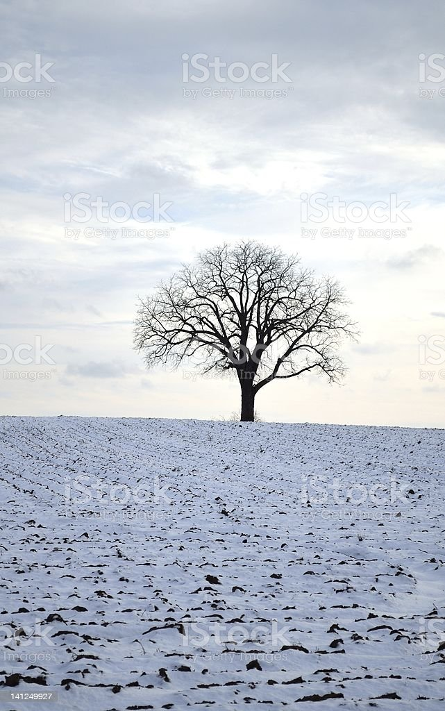 Winter Tree in snow field stock photo