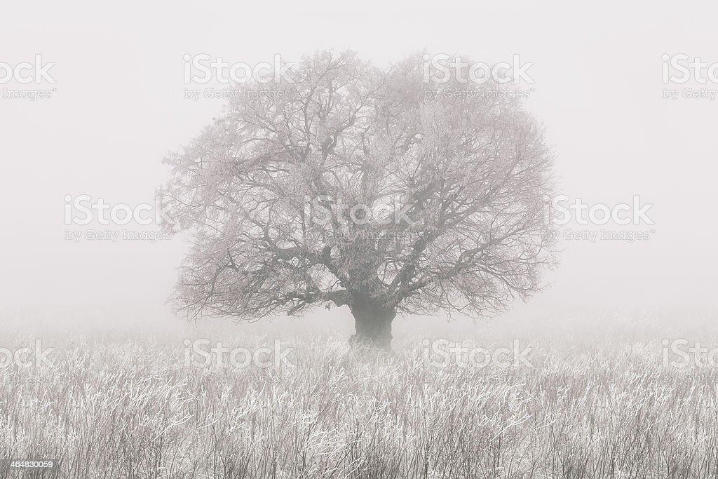 Arbre d'hiver dans le brouillard photo libre de droits