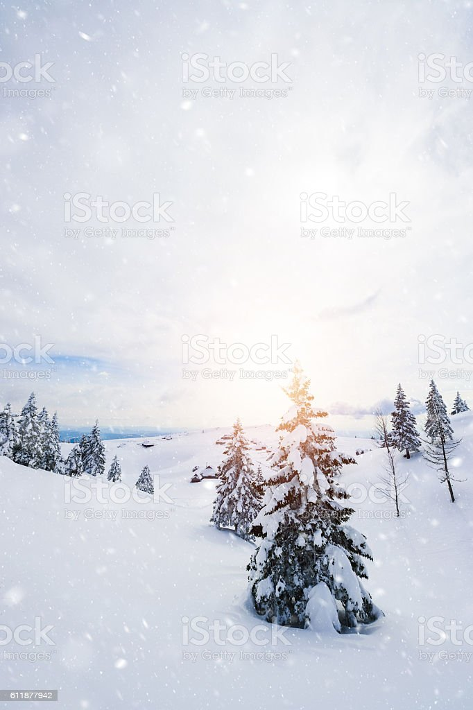 Winter tree in the morning light stock photo