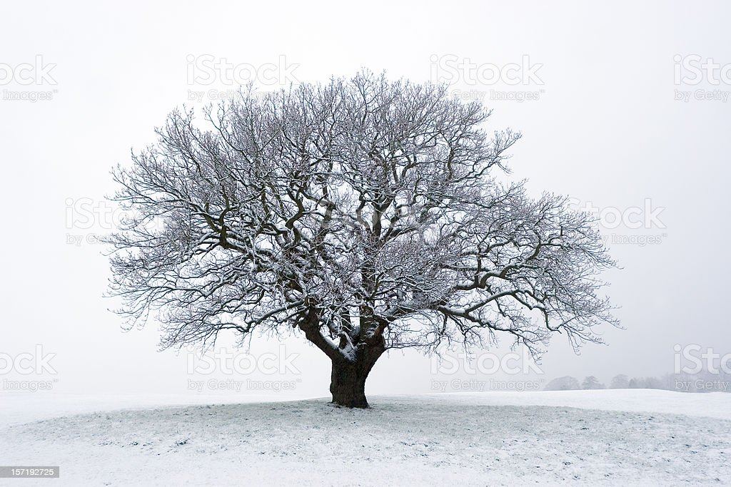 Winter Tree In The Snow royalty-free stock photo
