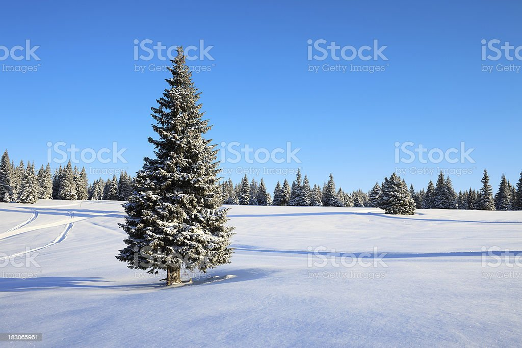 Winter Tree On A Beautiful Day royalty-free stock photo