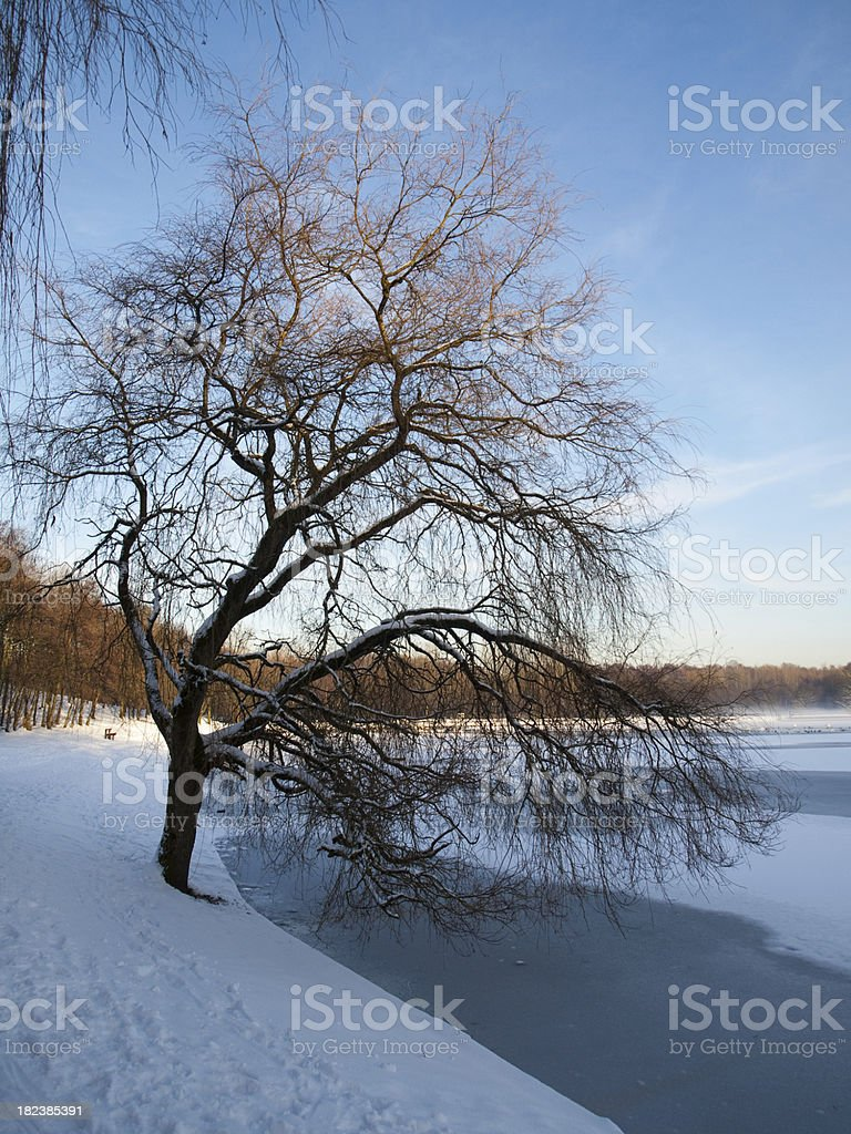 Winter tree over frozen lake Moses Gate Country Park stock photo