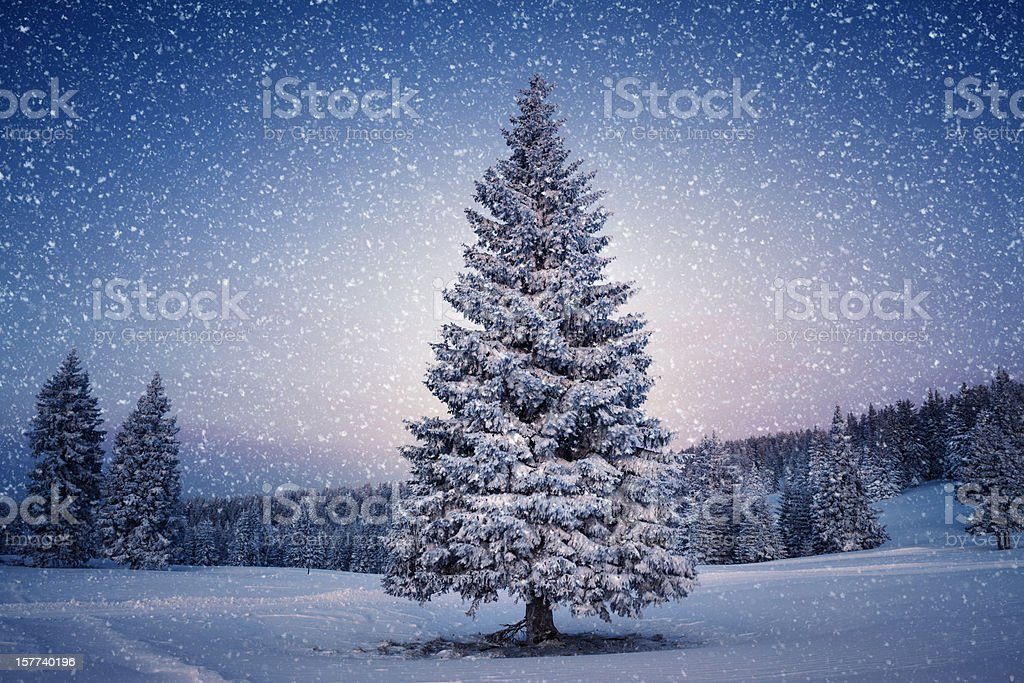 Winter Tree stock photo