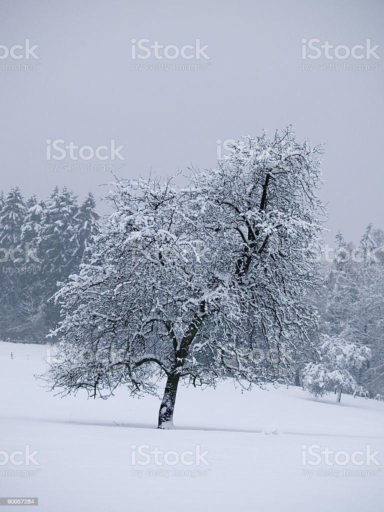 Winter Tree royalty-free stock photo