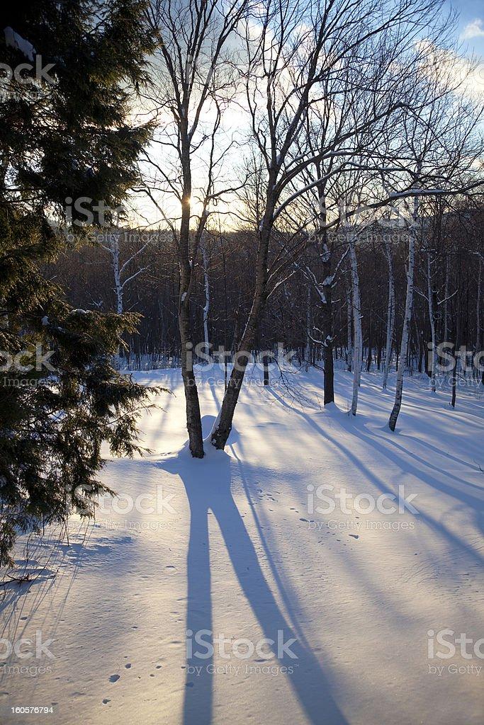 Winter tree shadow in late afternoon royalty-free stock photo