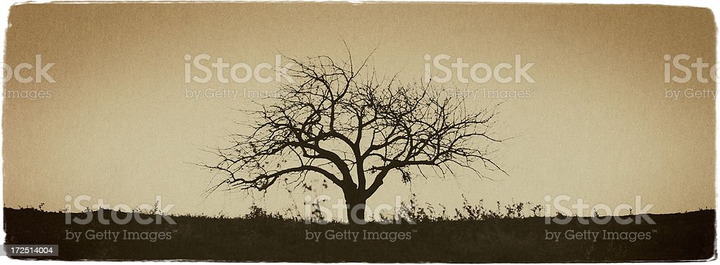 Winter Tree - Vintage Look Series royalty-free stock photo