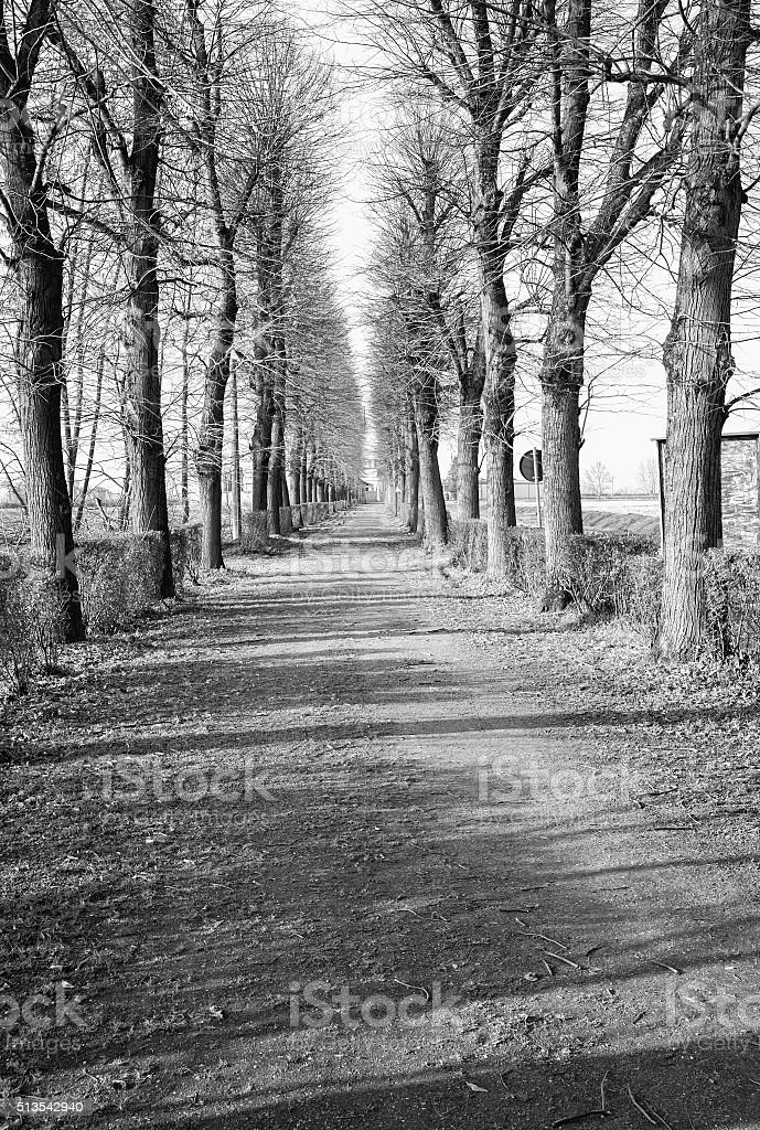Winter tree-lined street. Black and white photo stock photo