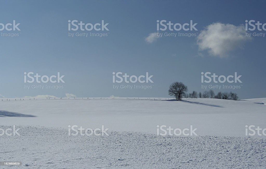 winter trees and cloud royalty-free stock photo