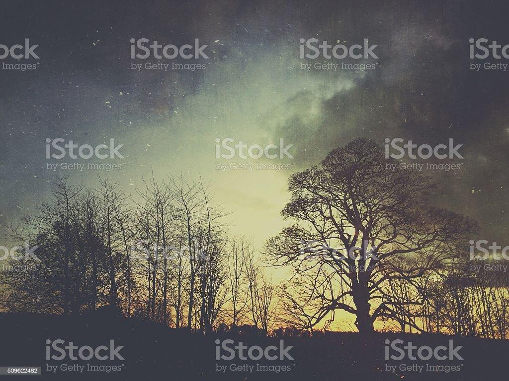 Winter Trees at Sunset stock photo