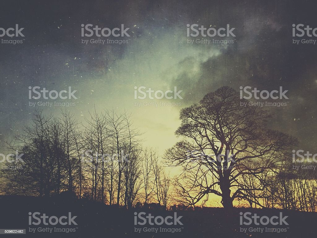 Winter Trees at Sunset stock photo