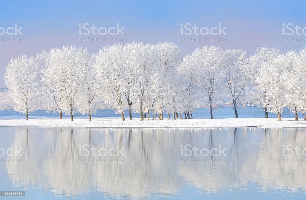 winter trees covered with frost stock photo