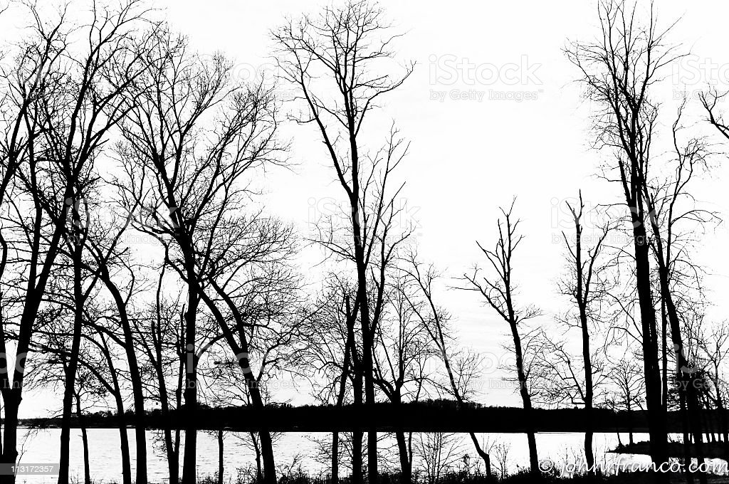 Winter Trees in Black and White stock photo