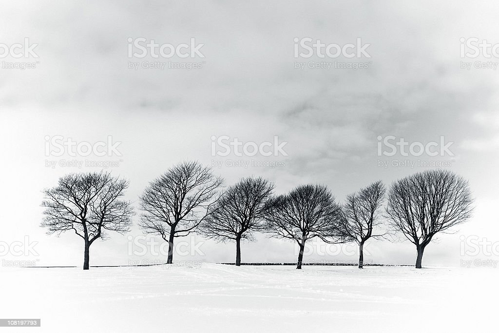 Winter Trees in Field of Snow, Black and White stock photo