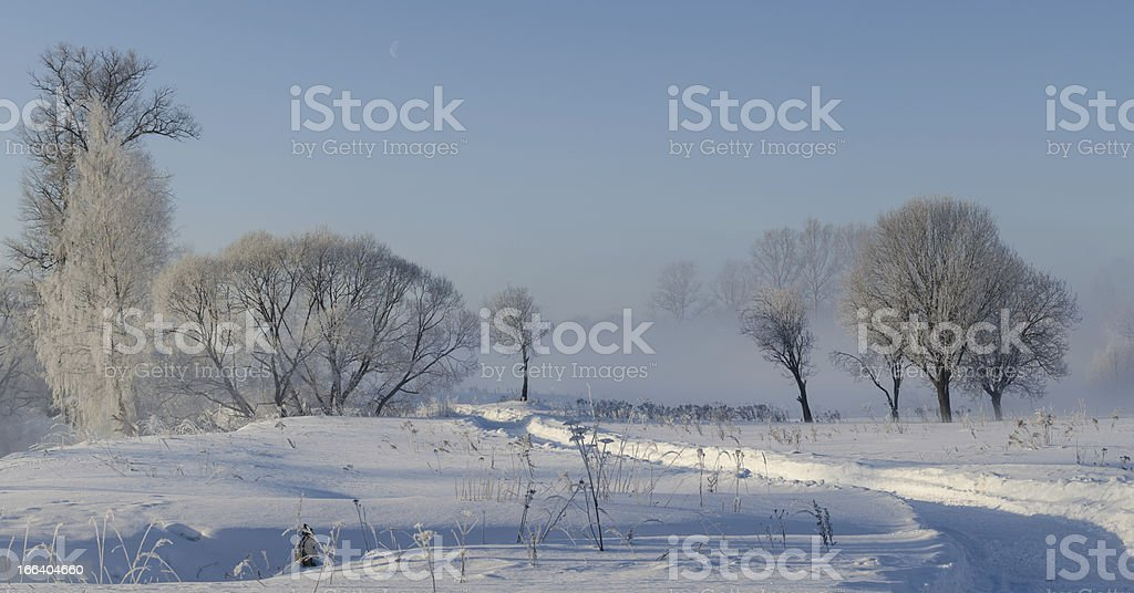 winter trees in fog royalty-free stock photo