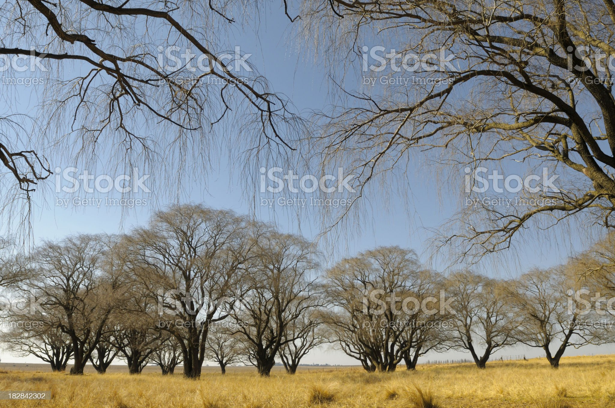 Winter trees in Free State landscape royalty-free stock photo