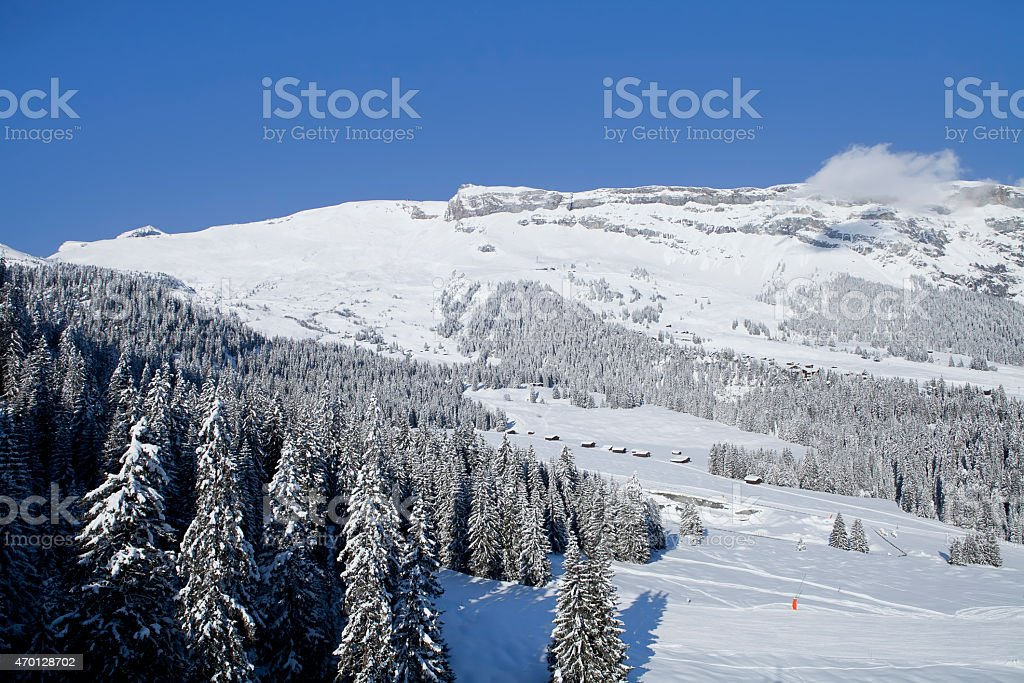Winter trees in mountains stock photo