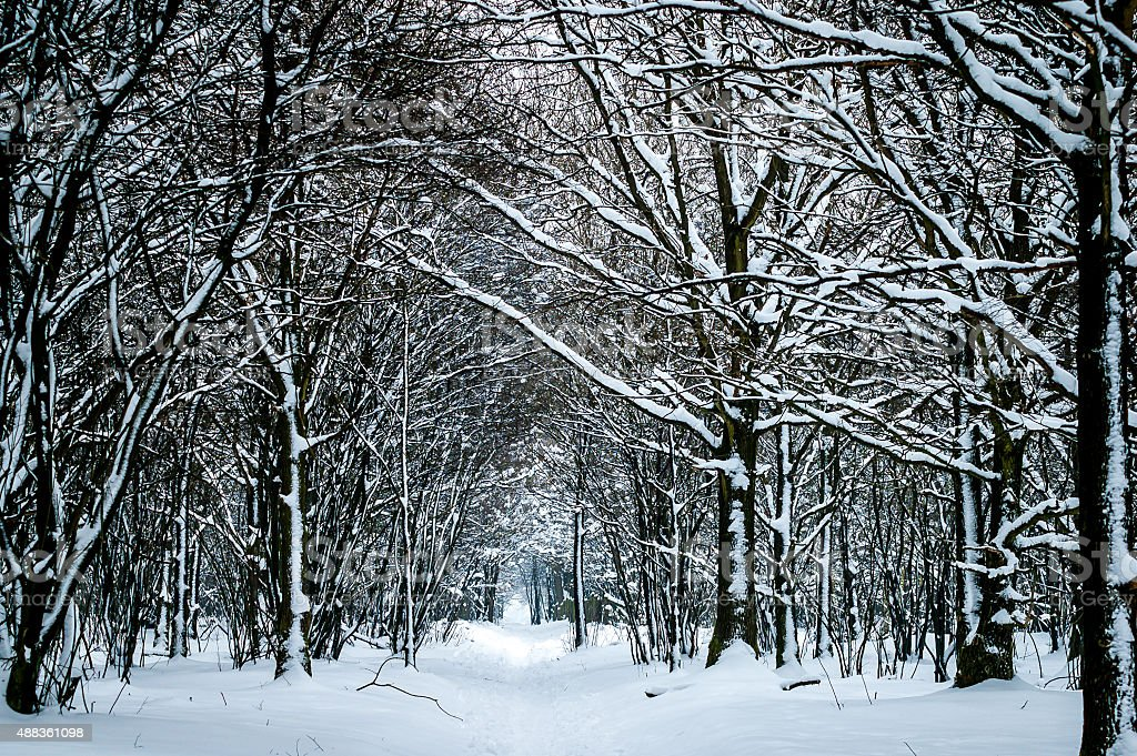 Winter trees in snow stock photo