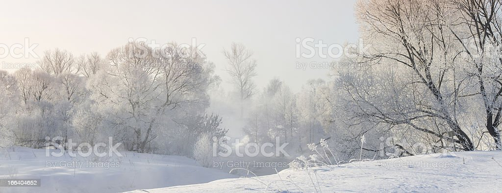 winter trees near a river covered with hoar at morning royalty-free stock photo