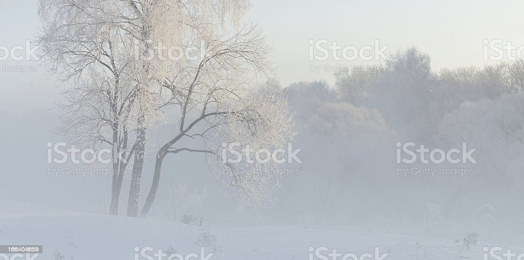 winter trees near  covered with hoar at morning lit sunligh royalty-free stock photo