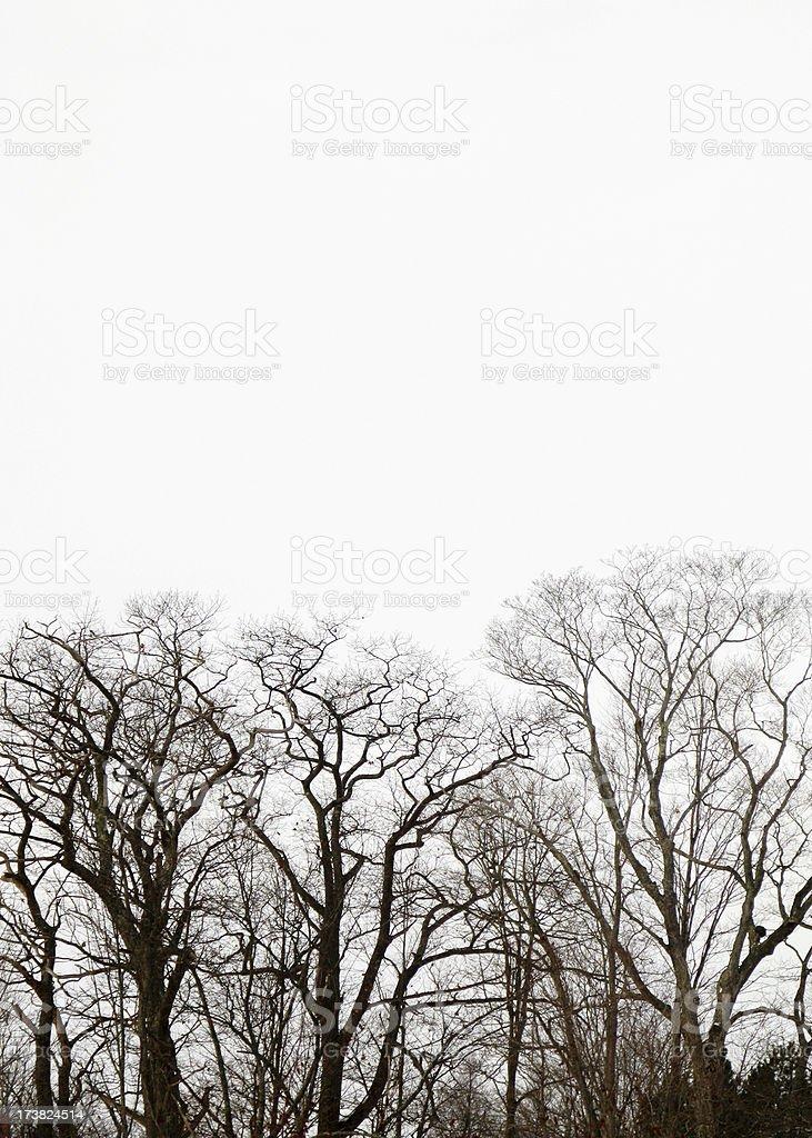 Winter trees. royalty-free stock photo