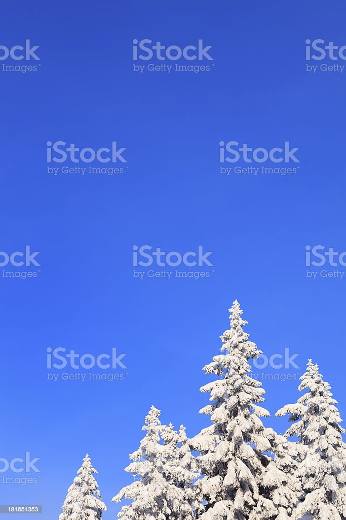 Winter Trees royalty-free stock photo