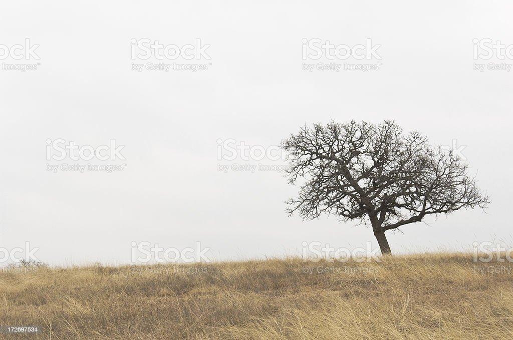 Winter Trees-4 royalty-free stock photo