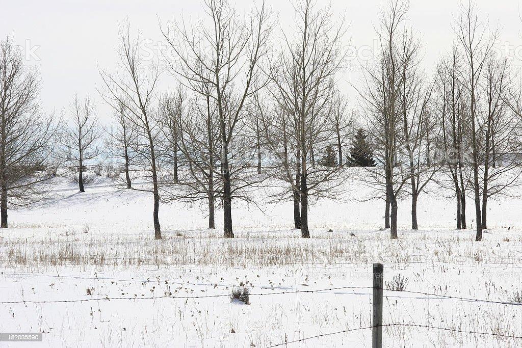Winter Treescape royalty-free stock photo
