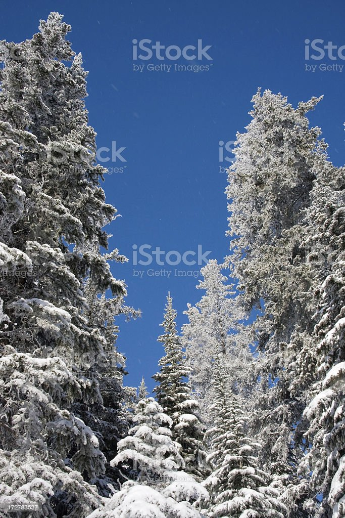 Winter treetops stock photo