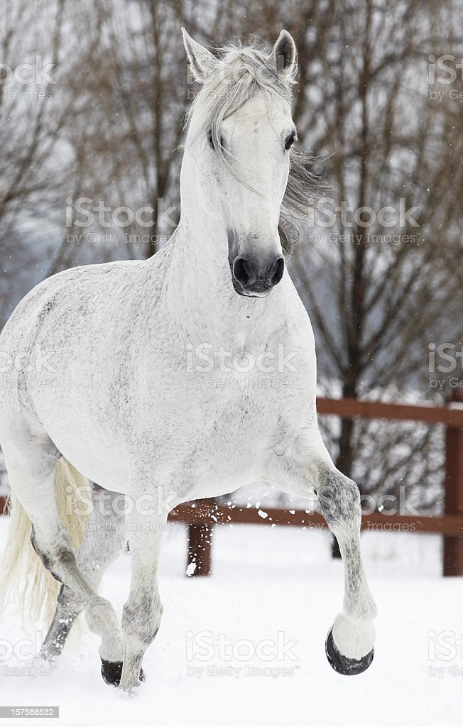 Winter trot stock photo