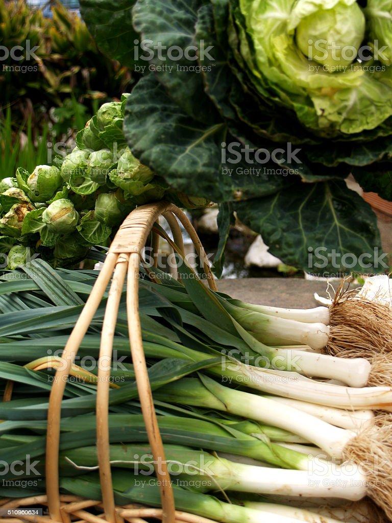 Winter Vegetables. stock photo