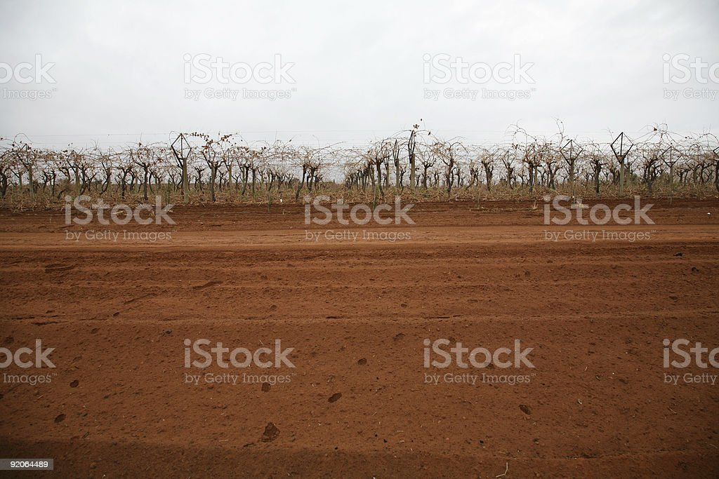 Winter vines red soil royalty-free stock photo