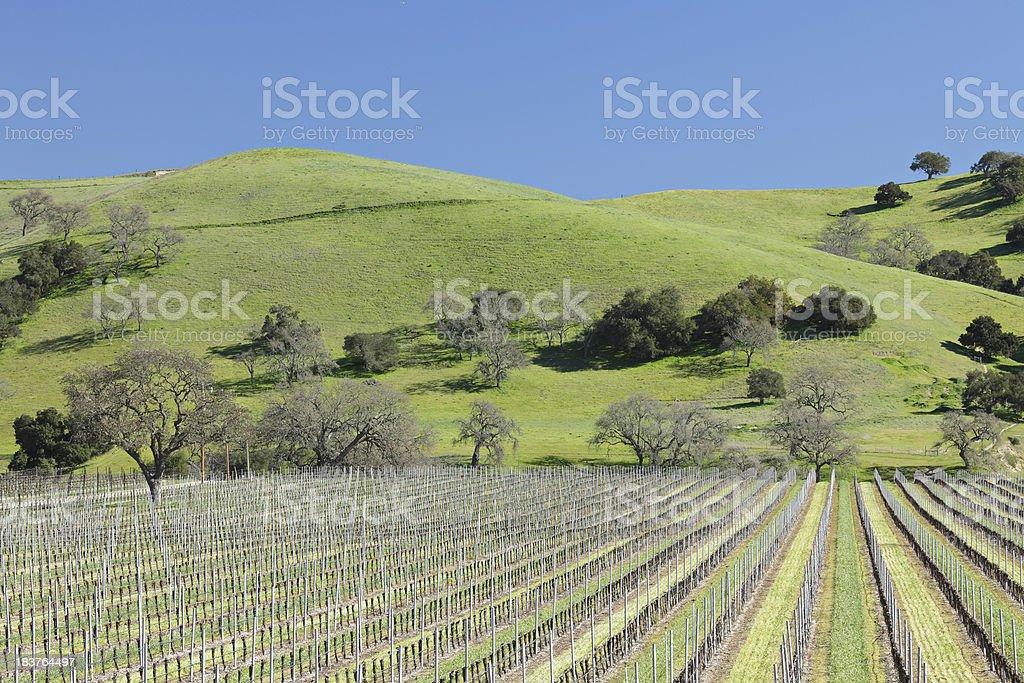 Winter Vineyard stock photo